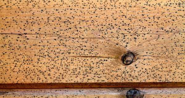 Особенно тяжело вывести грибок и плесень с деревянных стен