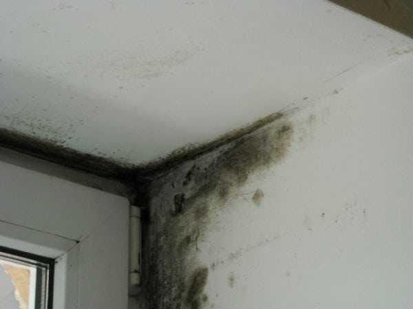 Появление грибка может быть вызвано недостаточной защитой стен от холода