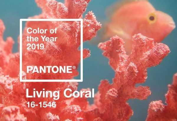 Living Coral цвет 2019 года