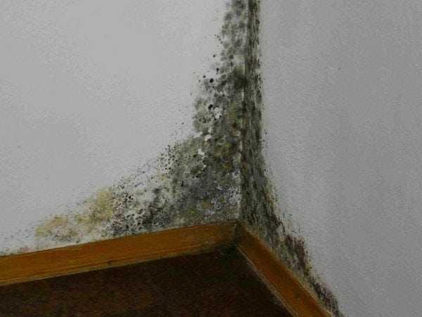 Появление грибка на стенах может привести к заболеваниям органов дыхания