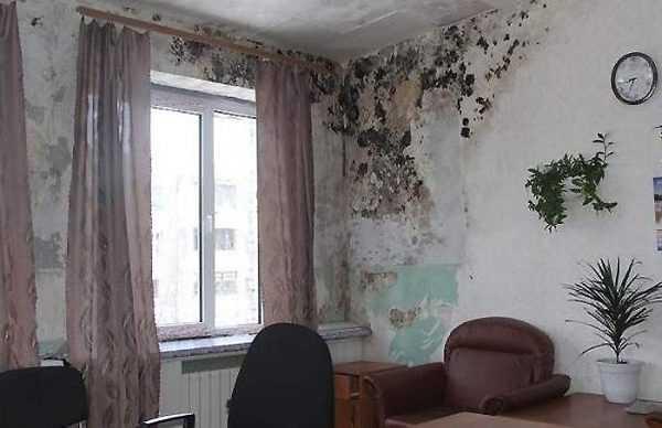Обычно плесень появляется на стенах из-за повышенной влажности