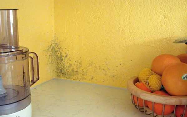 Часто плесень можно принять за обыкновенную грязь